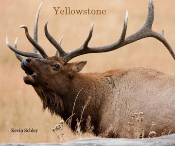 yellowstone photography book